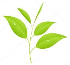 comprar te verde